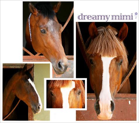 Horsesb_5