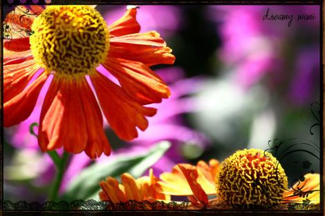 Rayaflower