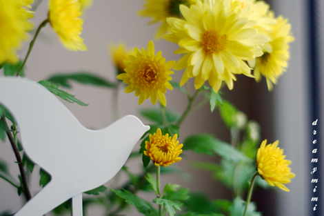 Birdflowrblog