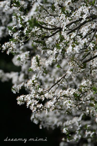 Blossom1b